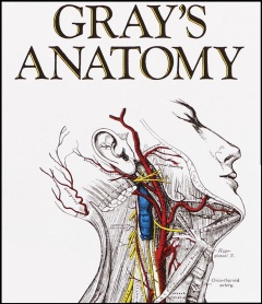 graysanatomybook